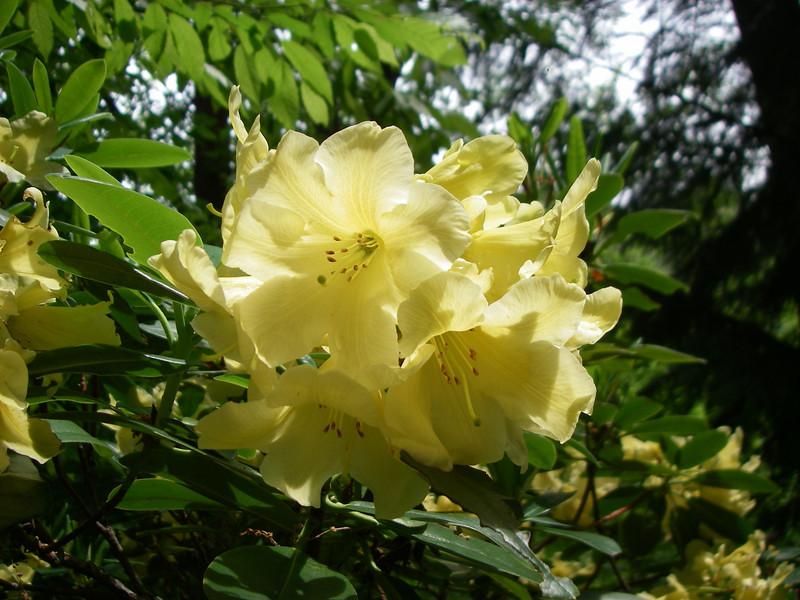Lithia Park - flowers 5