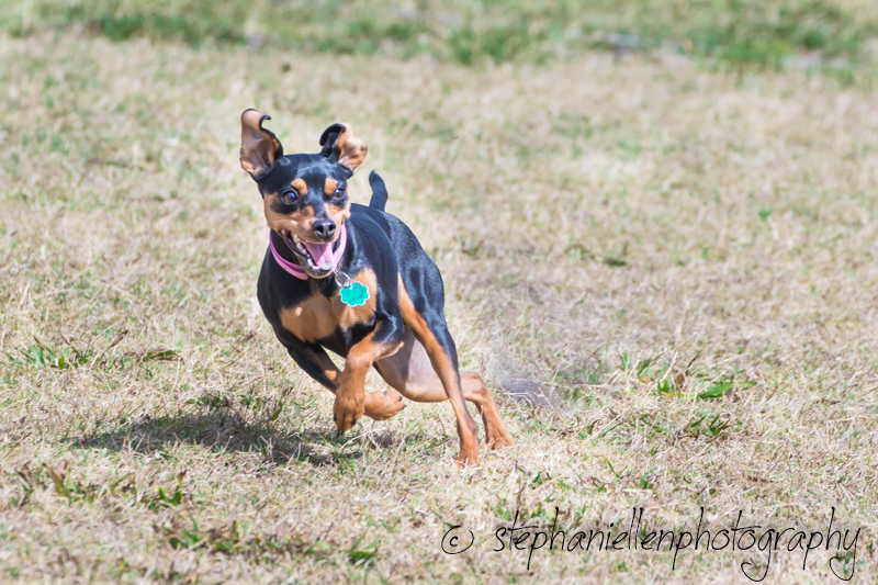 Woofstock_carrollwood_tampa_2018_stephaniellen_photography_MG_8363.jpg