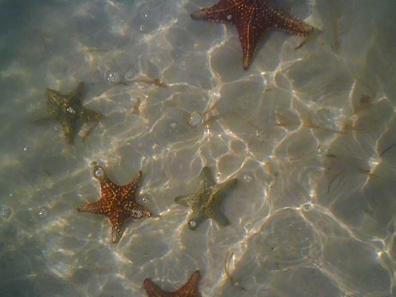 starfish at the bottom of crystal clear water