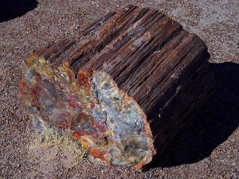 petrifed log.jpg