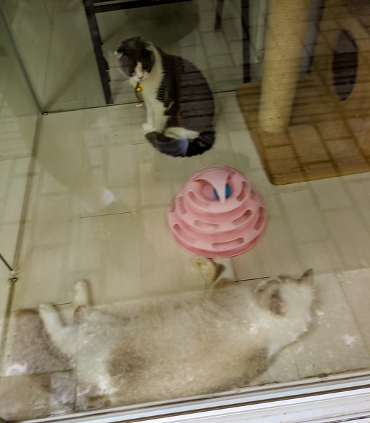 Friendcats! In a storefront. I couldn't figure out why. Cute though.