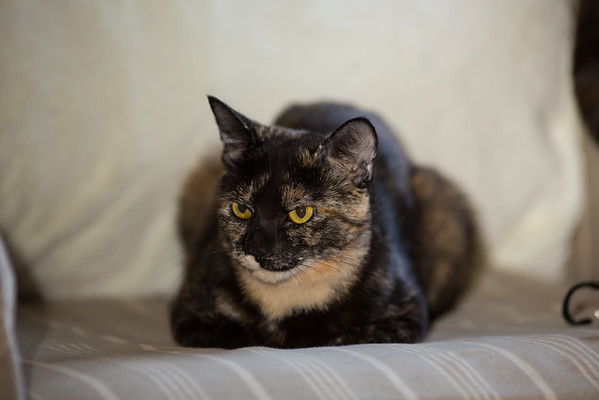 Tortie Time