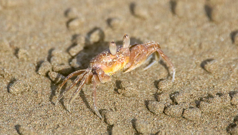 crab on the sand at the beach