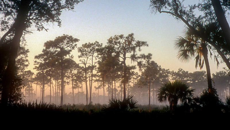 Myakka Hiking Trail morning mist