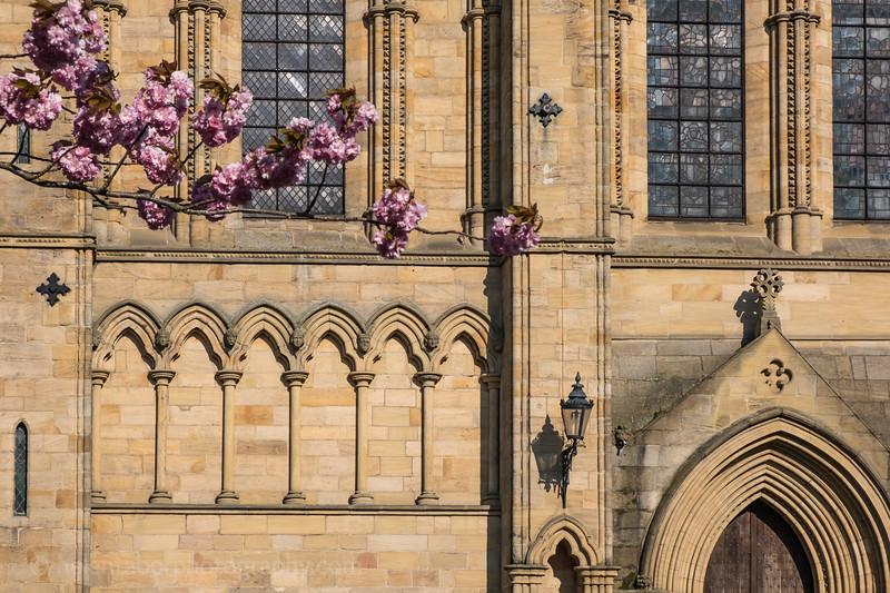 Ripon Cathedral & cherry blossom-50.jpg