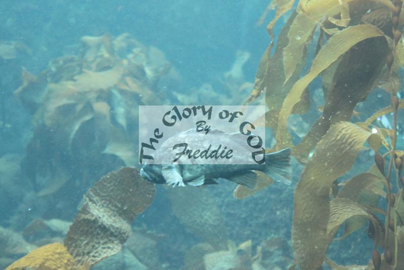 Aquarium 20143.jpg