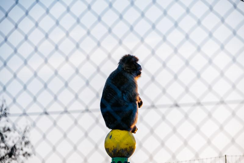 Tonis Zoo-0549.jpg