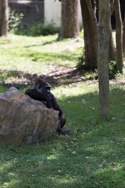 2015_08_20 Kansas City Zoo 043.jpg