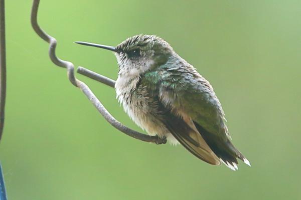 Birding 2021 September