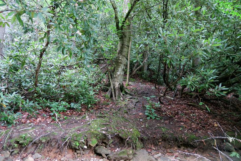 Sol's Creek Falls 'Trailhead'