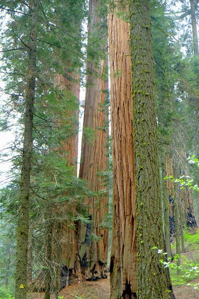 California Day 6 Sequoia 05-30-2017 77.JPG
