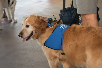 National Service Week: Love on a Leash Campus Visit