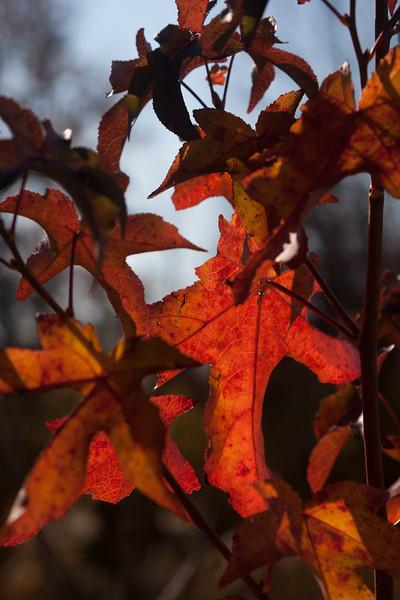 20121021-2012-10-2116-03-4213173.jpg