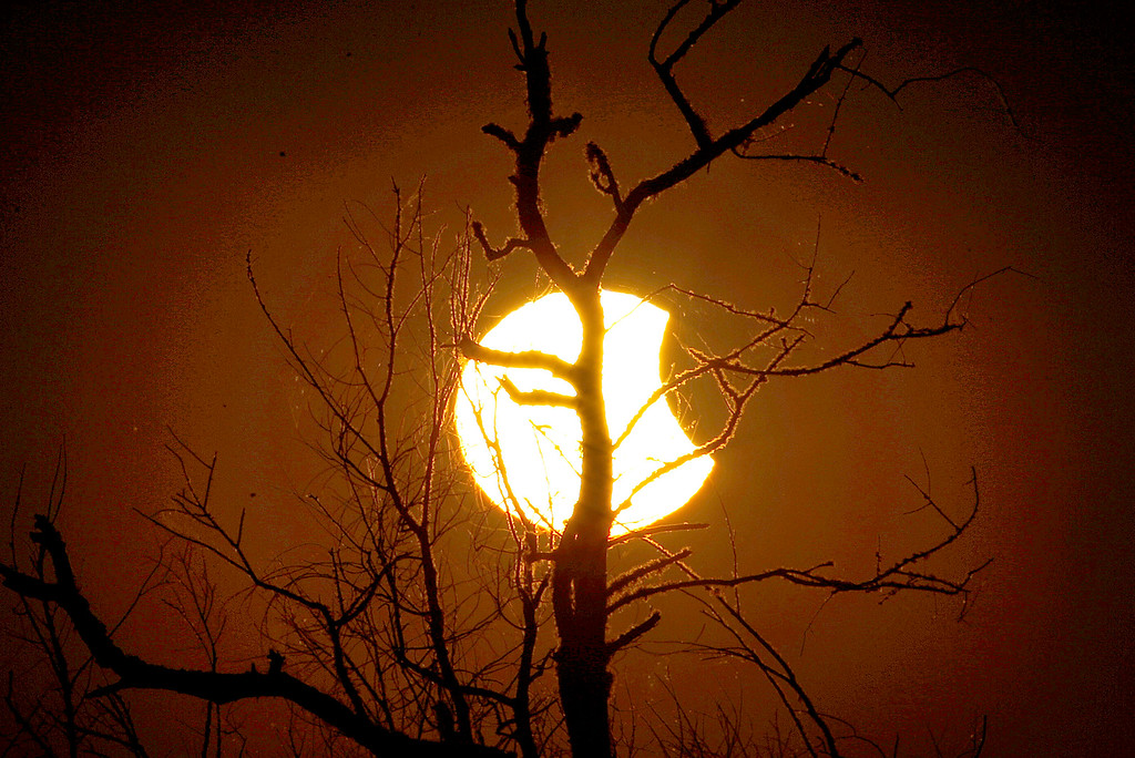 . Tree branches are silhouetted against the sun during a partial eclipse as seen from Paynes Prairie Thursday, Oct. 23, 2014, in Gainesville, Fla. (AP Photo/The Gainesville Sun, Matt Stamey)