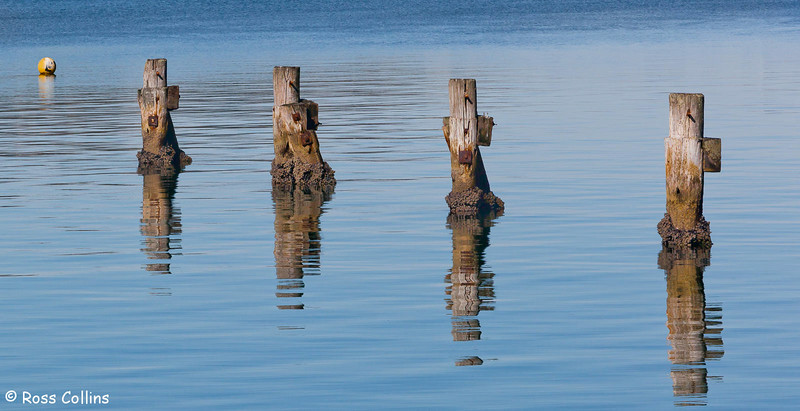 Refections of Evans Bay 2010