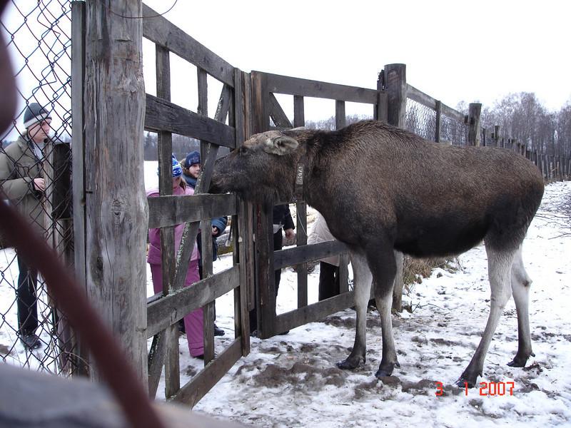 2006-12-31 Новый год - Кострома 129.JPG