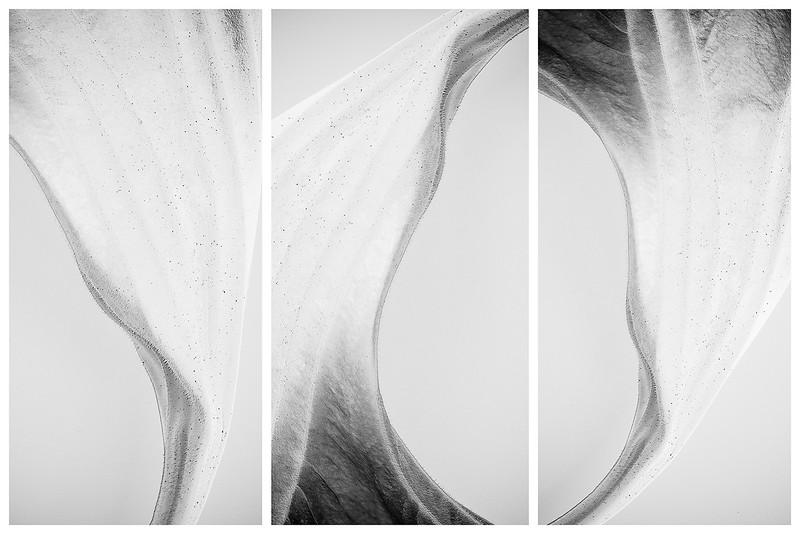 angel's trumpet triptych