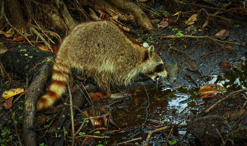 Animals&Creatures-018.jpg