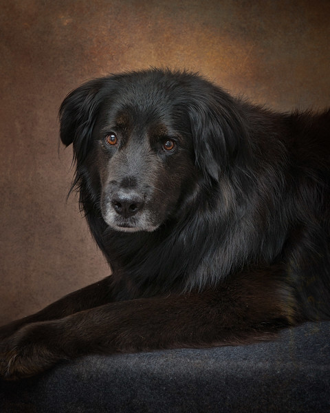 Sit. Pet Portraits by Kim Sayre Photography