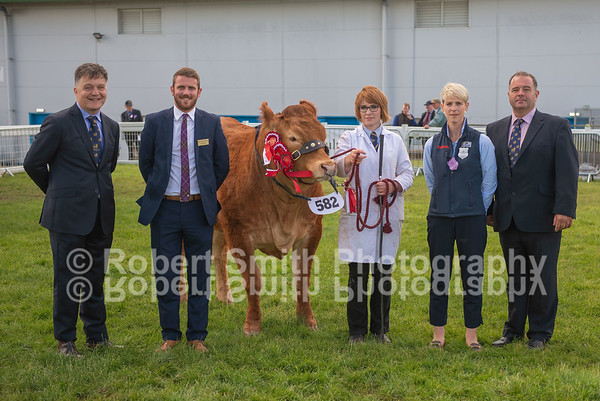 Limousin Judging at Royal Highland Show 2018