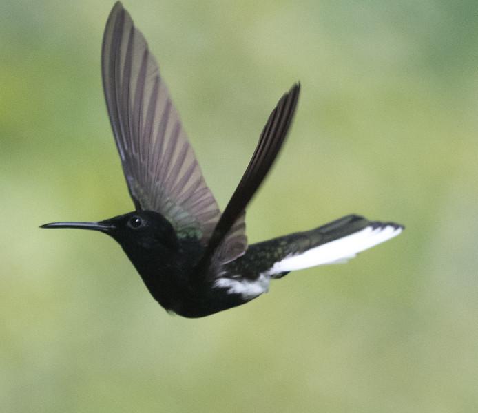 19-Sept Brazil Birds-9094.JPG