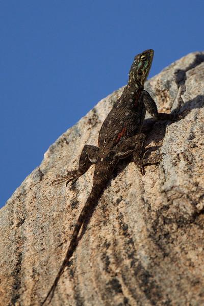 Reptiles, Terrapins