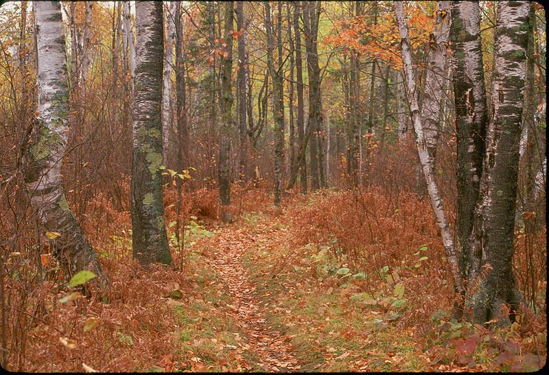 Portage in Fall
