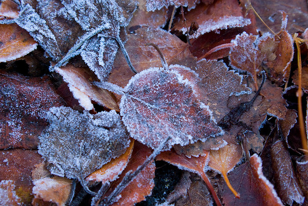 Autumn - frost