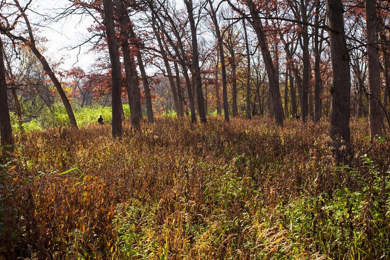 Fullersburg Woods, Oak Brook Nov 2014