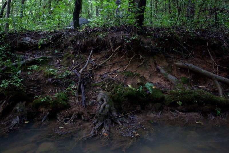 Forest7.jpg