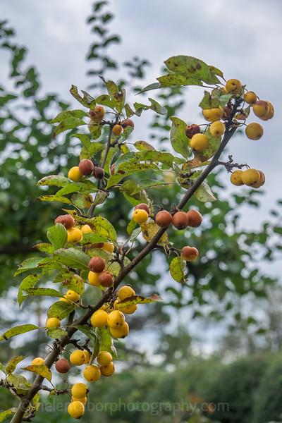 Hob Green autumn-18.jpg