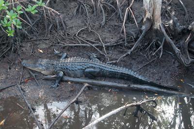 Everglades SW Florida