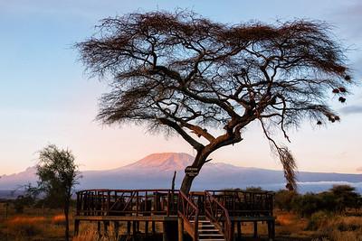 Main Trip Day 6 - Amboseli reserve