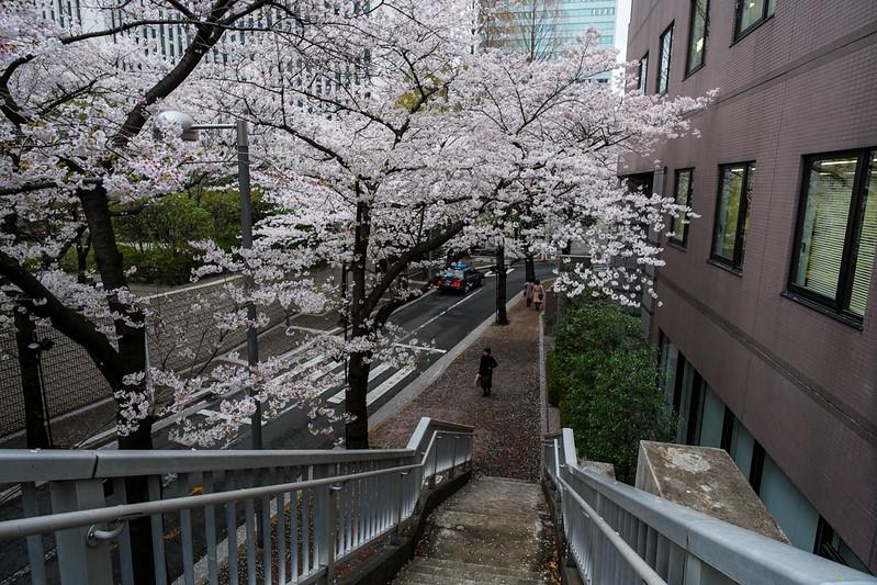Tokyo Day 2 (247 of 280).jpg