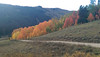 Crested Butte Washington Gulch