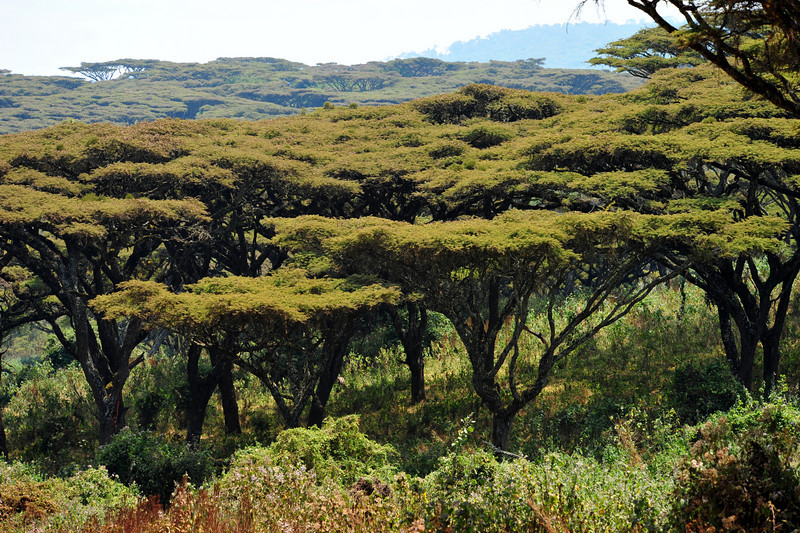 Africa 2010-028.JPG