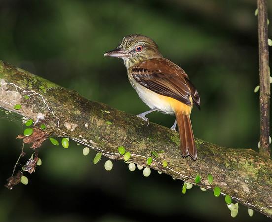 Attila Costa Rica