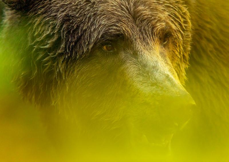 Bear in the Brush.JPG