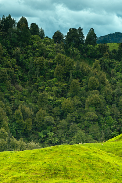 New Zealand_021.jpg