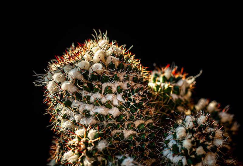 Cactus 091519-0155.jpg