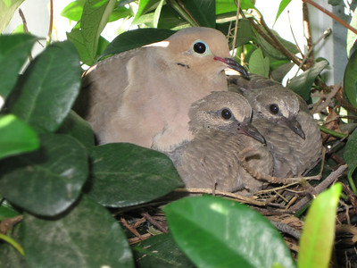 2011/07/20 >> Birds