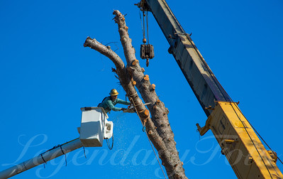 2015 May tree removal