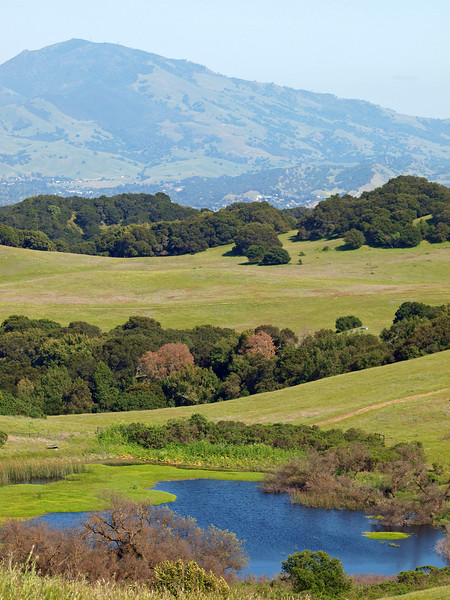 Mt. Diablo and pond, Briones