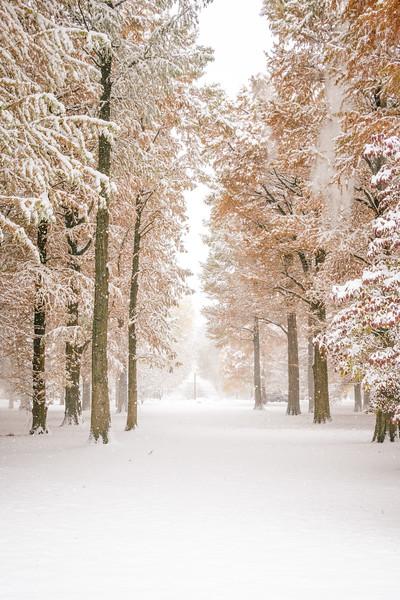 A Snowy Path in Tower Grove Park