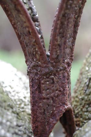 Griffis Sculpture Park 4.17.10