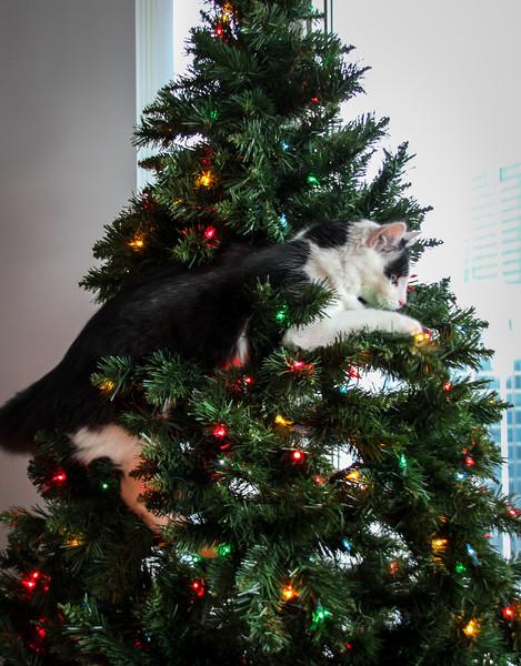 Buddy Christmas (15 of 26).jpg