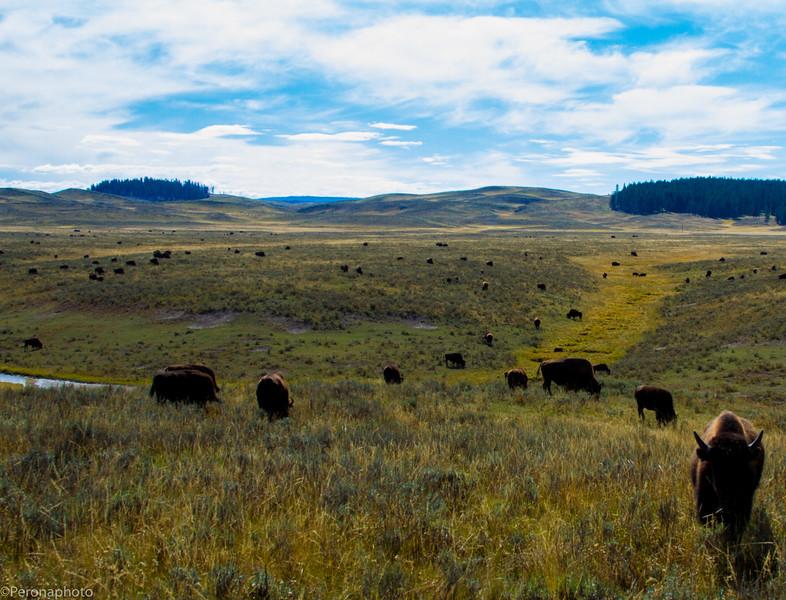 Yellowstone (734 of 366).jpg