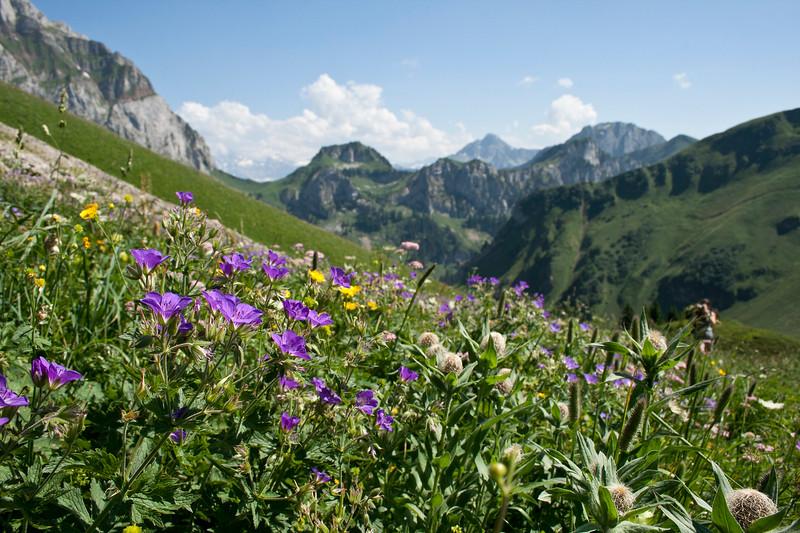 Alpine carpet