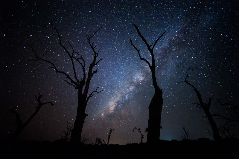 In Yala National Park, Sri Lanka, the skies are dark. I came across a dried lake bed surrounded by dead trees. I knew the Milky Way was about to rise and so I positioned my camera to capture the silhouettes of the trees against the starry night sky. #BBC #EarthOnLocation #SriLanka #Night #Stars #Astrophotography #Trees