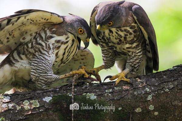 2020-11-12 Birding at Baker Street